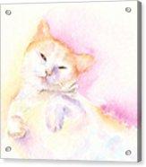 Playful Cat II Acrylic Print