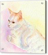 Playful Cat IIi Acrylic Print