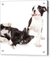 Playful Kitten And Puppy Playing Acrylic Print