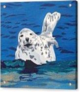 Playful Pup Acrylic Print