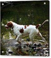 Playing In The Creek Acrylic Print