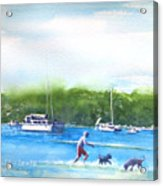 Playing With The Dogs At Rose Bay Acrylic Print