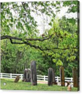 Pleasant Forest Cemetery Acrylic Print