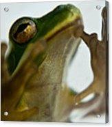 Please Not In A Frogs Eye Acrylic Print
