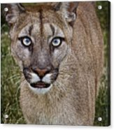 Please Stroke Me Acrylic Print