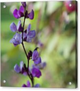 Pleasing Purple Plant Picture Acrylic Print