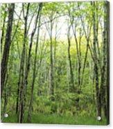 Pleasure Of Pathless Woods - Nat Acrylic Print