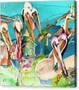 Plethora Of Pelicans Acrylic Print