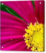 Plink Flower Closeup Acrylic Print