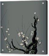 Plum Flower 3 Acrylic Print by GuoJun Pan