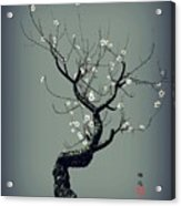 Plum Flower Acrylic Print by GuoJun Pan