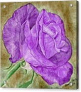 Plum Passion Rose Acrylic Print