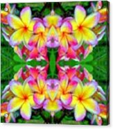Plumeria Art Acrylic Print