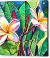 Plumeria Garden Acrylic Print by Marionette Taboniar