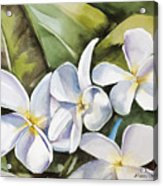 Plumeria II Acrylic Print