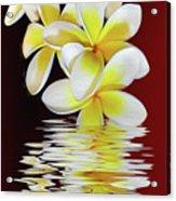 Plumeria Reflections By Kaye Menner Acrylic Print