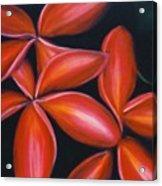 Plumeria Rouge Acrylic Print