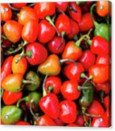 Plump Red Peppers Photo Stock Acrylic Print