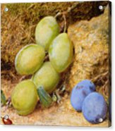 Plums And A Rose Hip On A Mossy Bank Acrylic Print