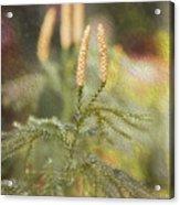 Poconos 7933 Acrylic Print