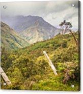 Podocarpus National Park Acrylic Print