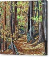 Podzim V Lese Po Pesine Behaj Bezci Acrylic Print