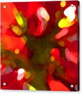 Poinsetta Acrylic Print
