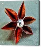 Poinsettia Flower  Acrylic Print