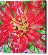 Poinsettia For Christmas Acrylic Print