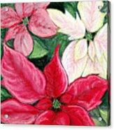 Poinsettia Pastel Acrylic Print