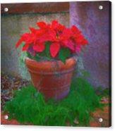 Poinsettia Pot Acrylic Print