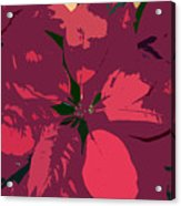 Poinsettias Work Number 4 Acrylic Print