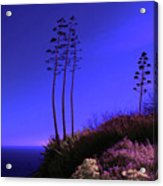 Point Fermin In Infrared Acrylic Print