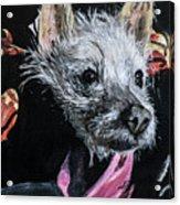 Pokita Acrylic Print
