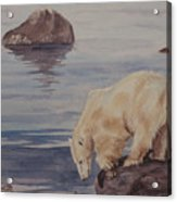 Polar Bear Fishing Acrylic Print