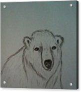 Polar Bear Acrylic Print by Ginny Youngblood
