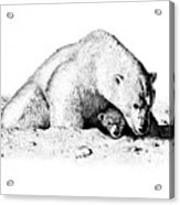 Polar Bear Protects Her Young Acrylic Print