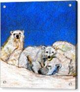 Polar Bears With Love Acrylic Print