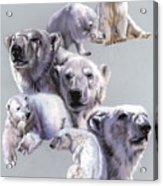 Arctic King Acrylic Print