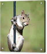 Pole Dancer 283 Acrylic Print