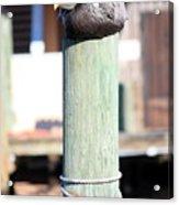 Pole Top Pelican Acrylic Print