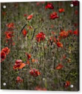 Polish Fields II Acrylic Print