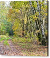 Polish Forest 1 Acrylic Print