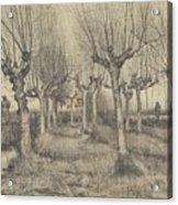 Pollard Birches Nuenen  March 1884 Vincent Van Gogh 1853  1890 Acrylic Print