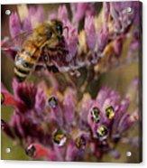 Pollen Bees Acrylic Print