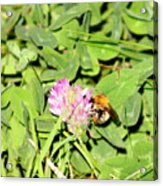 Pollen Collection Acrylic Print