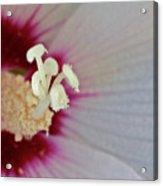 Pollen Acrylic Print