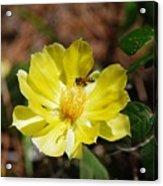 Pollinate Acrylic Print