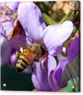Pollinating 2 Acrylic Print