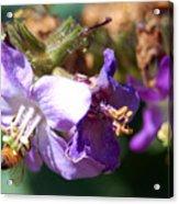 Pollinating 3 Acrylic Print